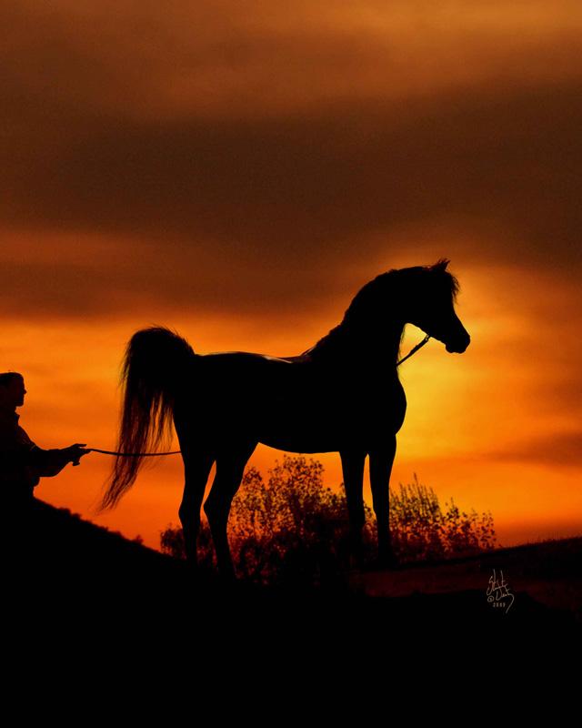 Pershahn_el_jamaal_sunset_1253-GALLUN-0405-810